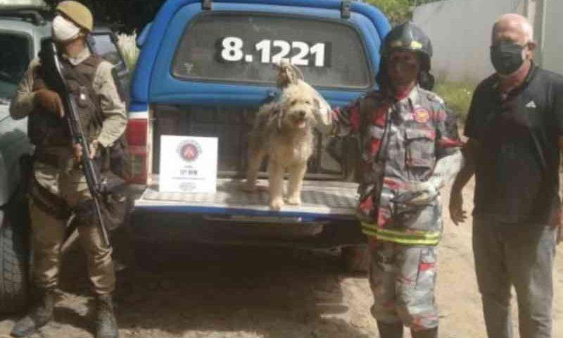 Em Camaçari (BA) animais são resgatados após denúncias de maus-tratos