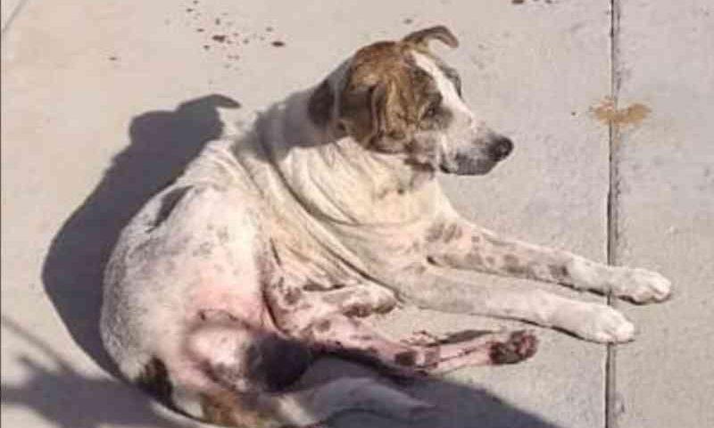 Comerciante é suspeito de atirar contra cachorro em Guanambi, BA