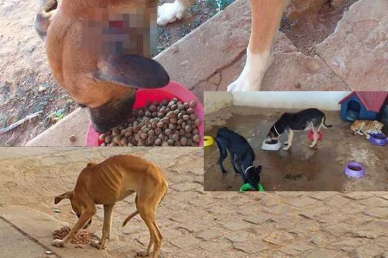 Número de animais abandonados ou vítimas de maus-tratos aumenta em Irecê (BA) e região