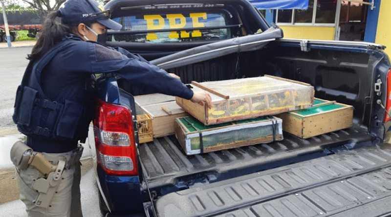 PRF resgata quase 100 pássaros silvestres em situação de maus-tratos na BR-242, na Bahia