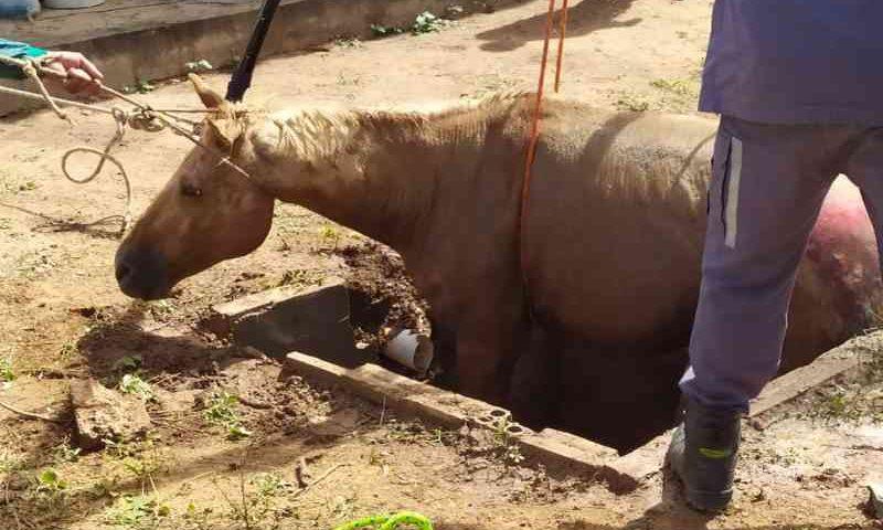 Bombeiros resgatam égua que ficou presa dentro de fossa em Barreiras, na Bahia