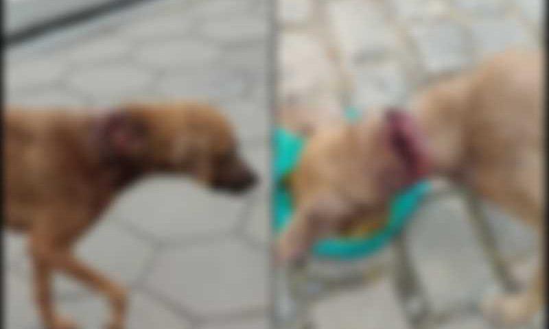 Internautas ficam revoltados com animais feridos aparentemente com golpes de facão em Jacobina, BA