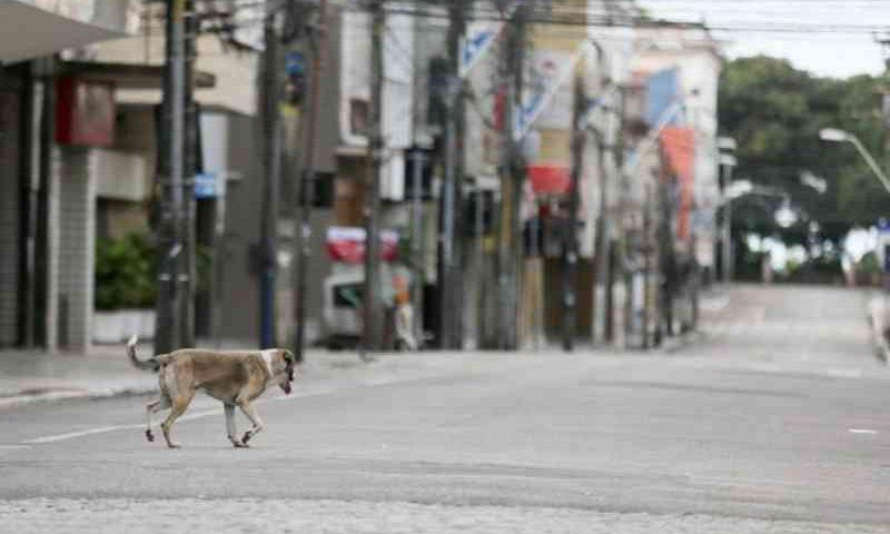 Após decisão da Justiça, Ceará tem 180 dias para criar abrigo que receba animais abandonados