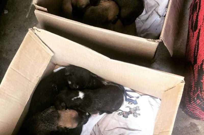 ONG cria ação de resgate de animais e entrega nas casas de potenciais tutores em Fortaleza, CE