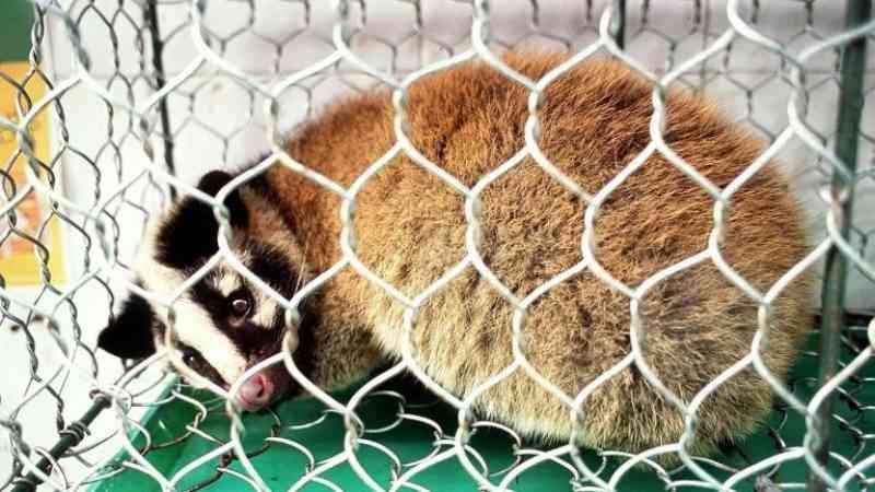 China oferece recompensa para fazendeiros abandonarem a criação de animais selvagens