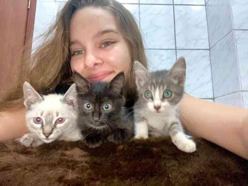 Adolescente da Serra (ES) faz campanha para ajudar gatinhos abandonados a encontrar um lar