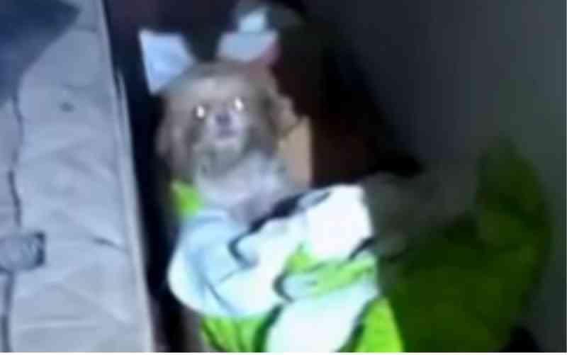 Casal é investigado por maus-tratos a 12 cães e gatos, em Goiânia, GO