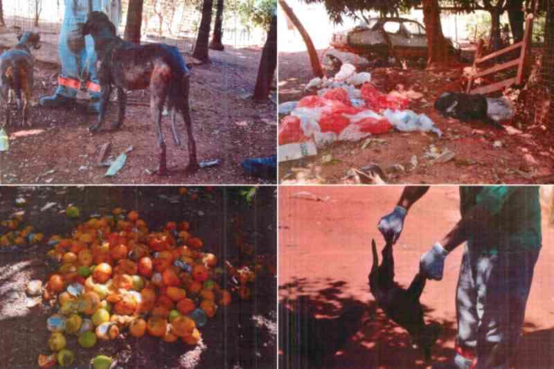 Após denúncia do MP, juíza determina que sejam feitas melhorias no Centro de Zoonoses de Goianésia, GO