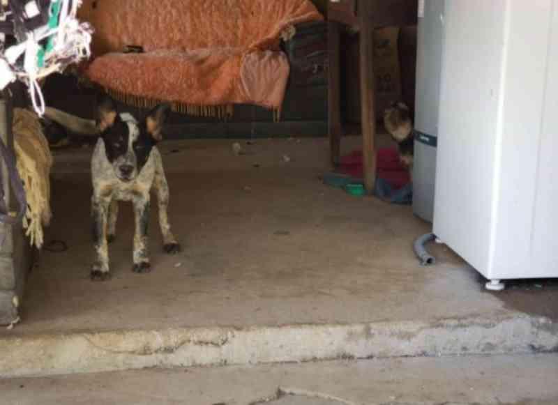 Em Ipameri (GO), suspeito de torturar cão vai para delegacia, mas é liberado para ficar com animal