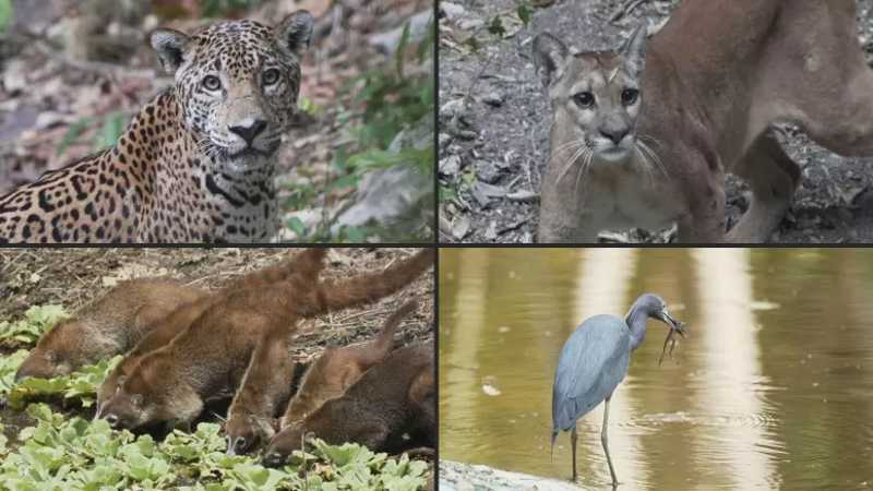 Animais reaparecem num parque nacional da Guatemala na ausência de visitantes