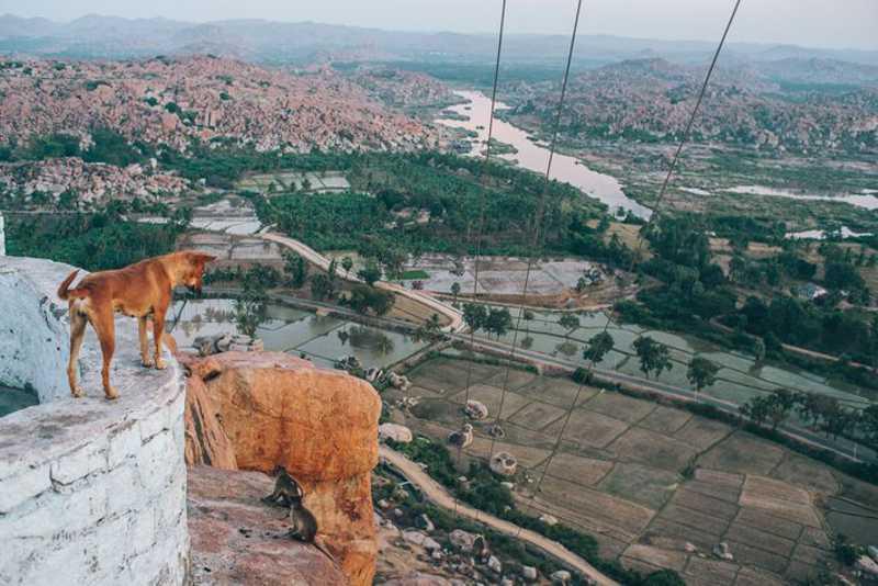 Um cão olha para a antiga vila de Hampi, Patrimônio Mundial da Unesco, no estado de Karnataka. FOTO DE JOSHUA COGAN
