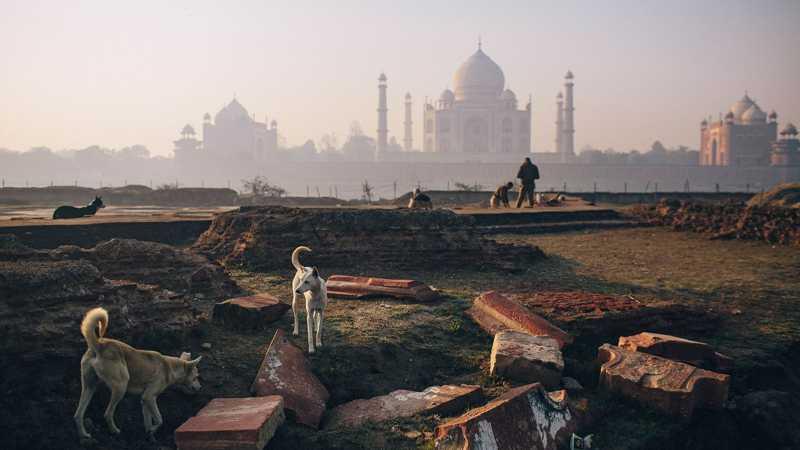A Índia possui mais de 35 milhões de cães de rua, como esses perto do Taj Mahal. FOTO DE JOSHUA COGAN