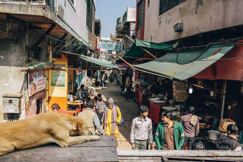 Um cão observa a vida passar perto de um templo em Uttar Pradesh, o estado mais populoso da Índia. FOTO DE JOSHUA COGAN