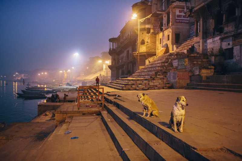 Dois cães de rua com cicatrizes olham desconfiados para a câmera. A vida de cães de rua pode ser difícil e cruel. Eles enfrentam constante competição por alimento e exposição a muitas doenças. FOTO DE JOSHUA COGAN