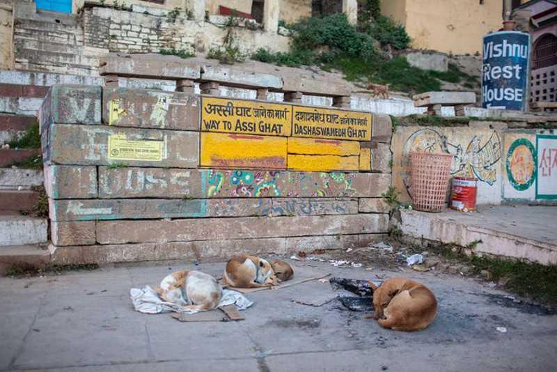 Cães dormem sobre pedaços de papelão para fugir do chão frio de Varanasi. FOTO DE JOSHUA COGAN