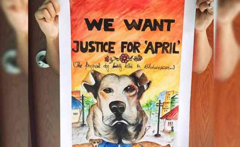 Assassinato brutal de cachorra prenhe na Índia gera o movimento 'Justiça pela April' em Odisha
