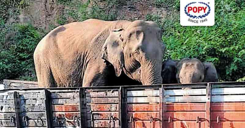 Elefantes selvagens visitam este caminhão carbonizado todos os dias na Índia. Aqui está o motivo.
