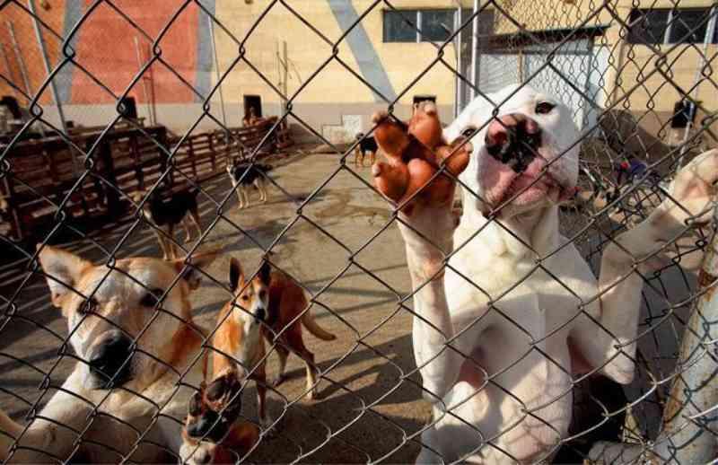 ONG registra queda de 80% nas adoções de animais durante a quarentena