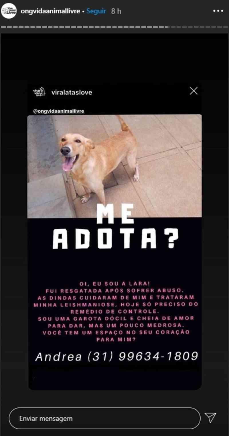 Prefeitura de Belo Horizonte (MG) e ONGs alertam para aumento de abandono de animais durante a pandemia