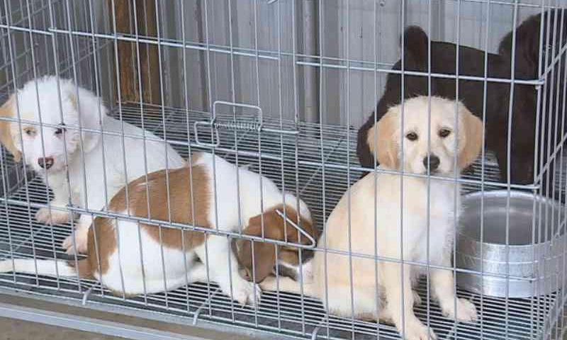 Animais resgatados em Brumadinho (MG) podem ser adotados de forma online