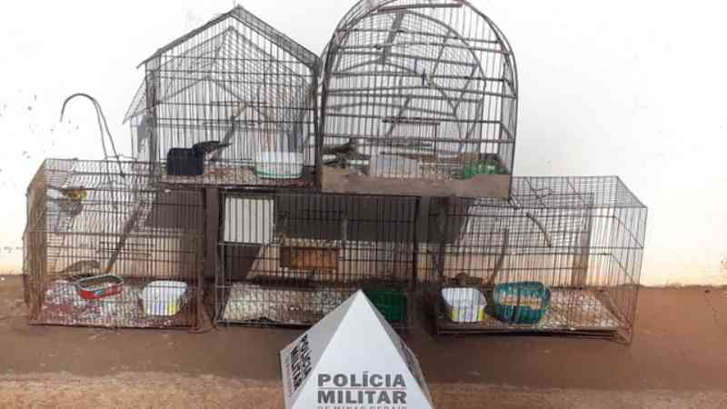 PM de Meio Ambiente flagra aves silvestres mantidas em cativeiro em Ituiutaba, MG