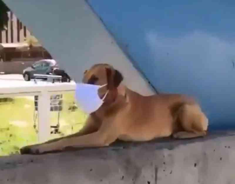 Vídeo de cachorro usando máscara em ponte de Juiz de Fora (MG) viraliza nas redes sociais