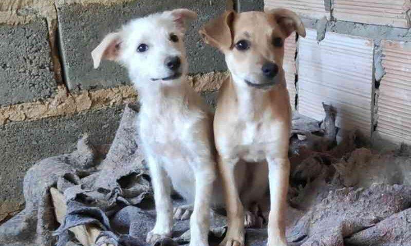 Live Pet Solidária é realizada para ajudar ONGs de animais em Montes Claros, MG