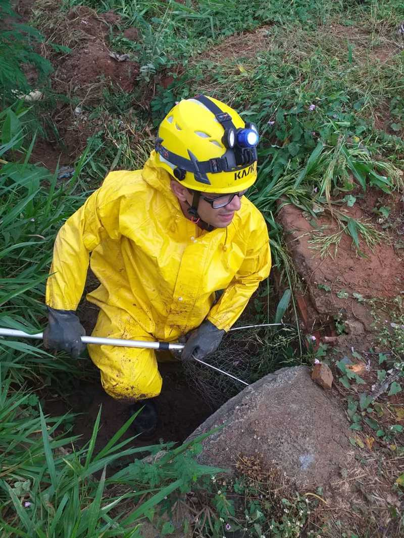 Bombeiros fizeram resgate dos cachorros no Bairro Santo Antônio — Foto: Corpo de Bombeiros/Divulgação