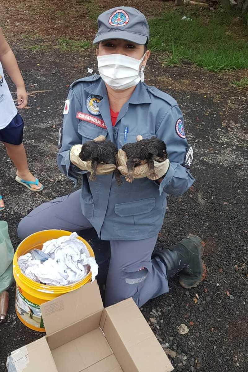 Dois dos cinco cachorros resgatados — Foto: Corpo de Bombeiros /Divulgação