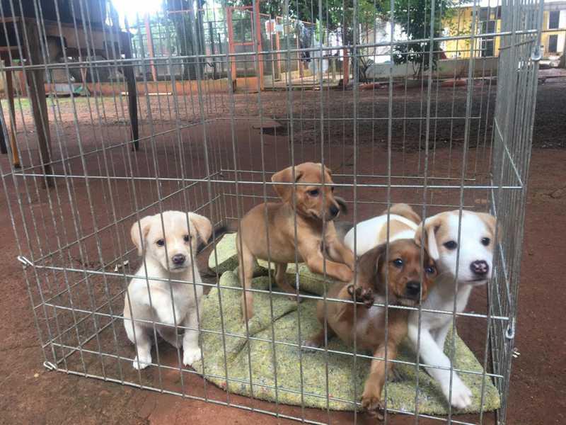 Filhotes de cães disponíveis para adoção na APA em Uberlândia — Foto: Associação Protetora dos Animais/Divulgação