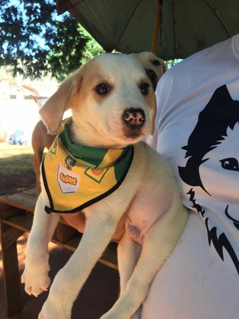 Filhote vira-lata disponível para adoção na APA em Uberlândia — Foto: Associação Protetora dos Animais/Divulgação