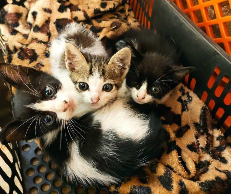 Filhotes de gatos disponíveis para adoção na APA em Uberlândia — Foto: Associação Protetora dos Animais/Divulgação