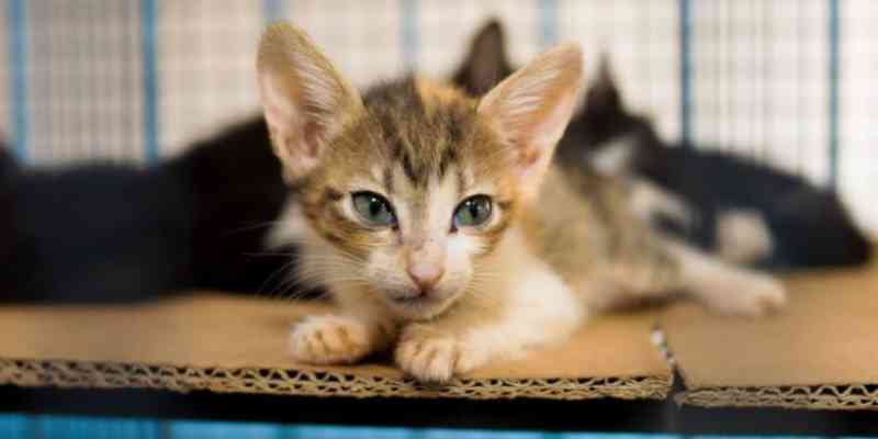 CCZ anuncia retorno gradativo para procedimentos de castração de felinos em Campo Grande, MS