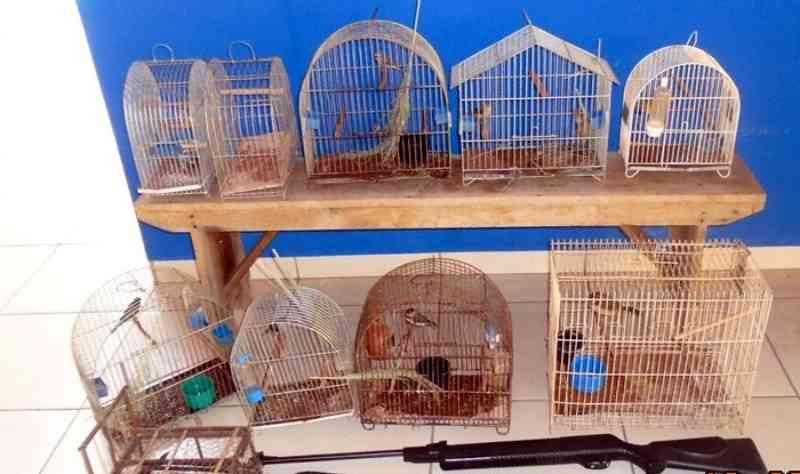 Homem é preso por manter pássaros silvestres ilegalmente em cativeiro, em Cassilândia, MS