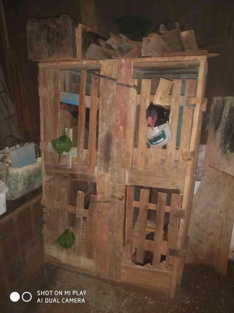 Dono de rinha é multado em R$ 15 mil por maus-tratos a 30 galos