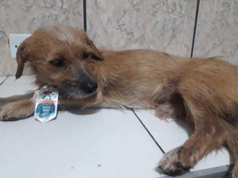 Depois de passar fome e ser atropelado, cãozinho precisa de ajuda