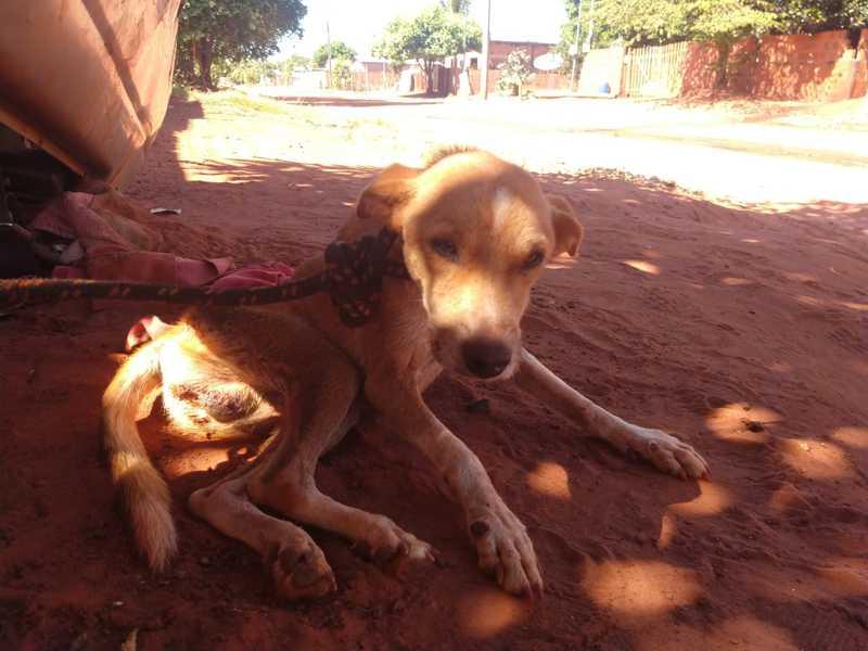 Cachorros são resgatados debilitados, sem comida e água em MS