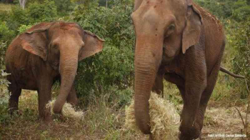 Santuário em Chapada dos Guimarães mudou a vida de vários elefantes resgatados em situação de risco
