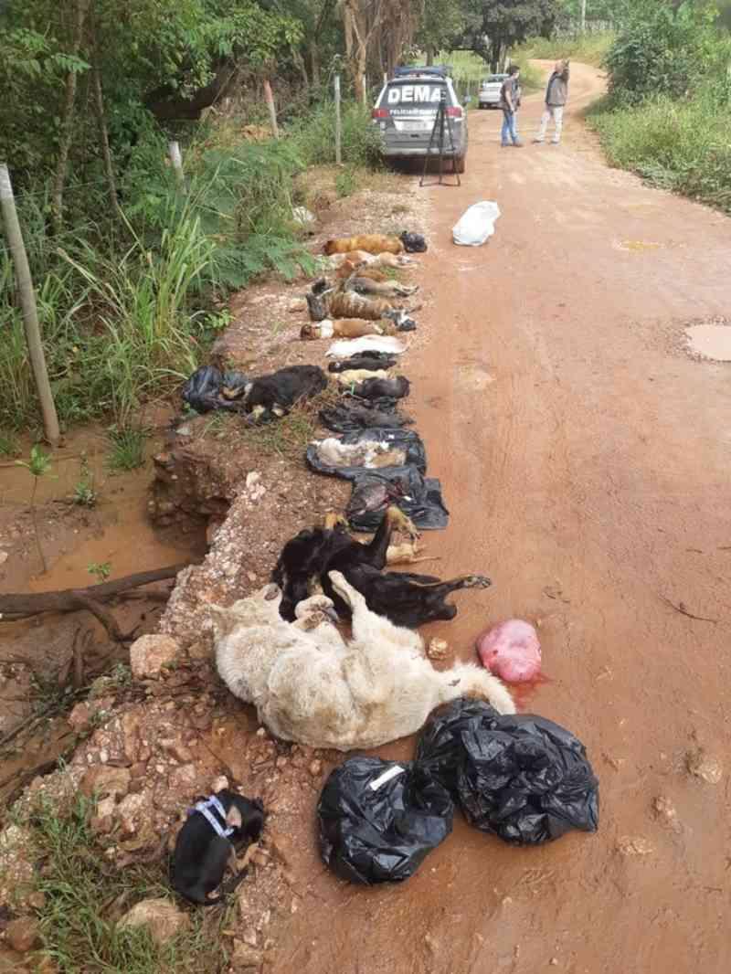 Polícia Civil encontra novos locais de desova de animais domésticos em Cuiabá, MT