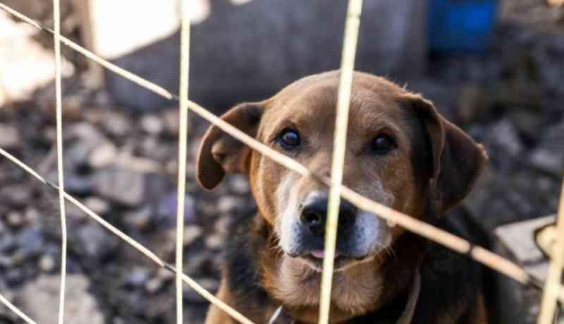 Homem é preso pela 2ª vez suspeito de maltratar animais em Sinop, MT