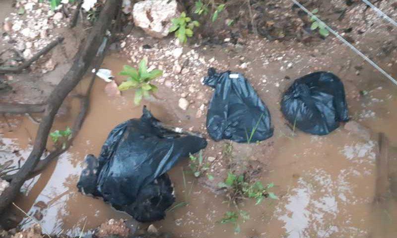 Quase 20 cães são encontrados mortos em área de mata em Cuiabá e polícia investiga — Foto: Polícia Civil de Mato Grosso