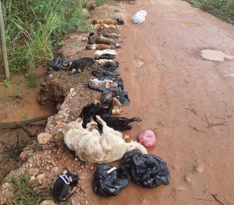 Polícia encontra 18 cães mortos em matagal de Cuiabá; veja vídeo