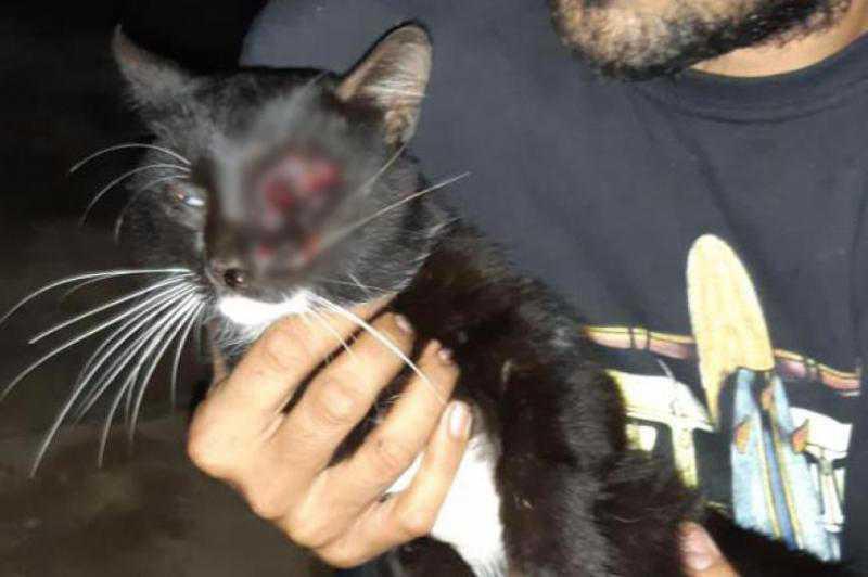 Homem é preso por atirar em olho de gato com arma de pressão em MT