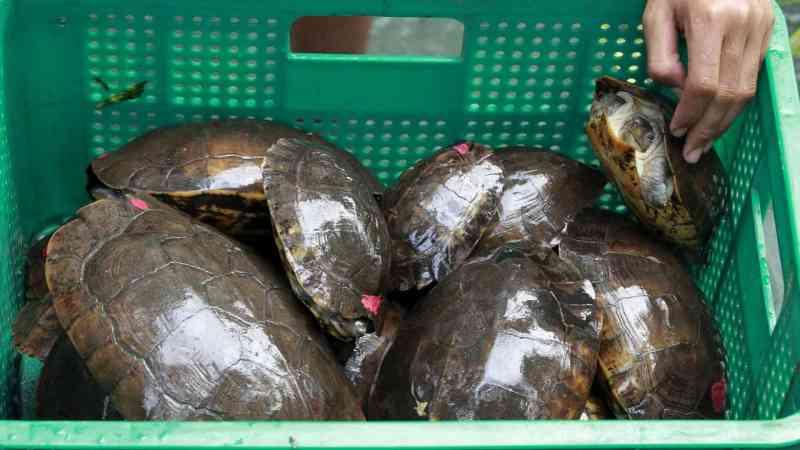 México apreendeu mais de 15.000 tartarugas a caminho da China