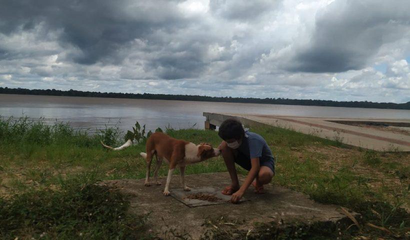 Menino aproveita tempo livre para ajudar cães durante o isolamento em Belém, PA