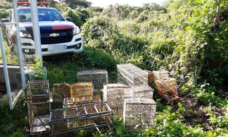 Batalhão de Polícia Ambiental incentiva entrega voluntária de animais silvestres no sertão da Paraíba