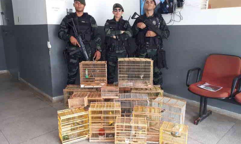 Combate aos crimes ambientais resulta em mais de 2 mil aves silvestres apreendidas na Paraíba
