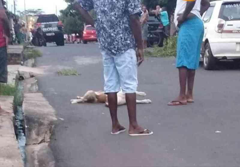 Cães são mortos a tiros dentro de casa durante perseguição policial em Teresina, PI