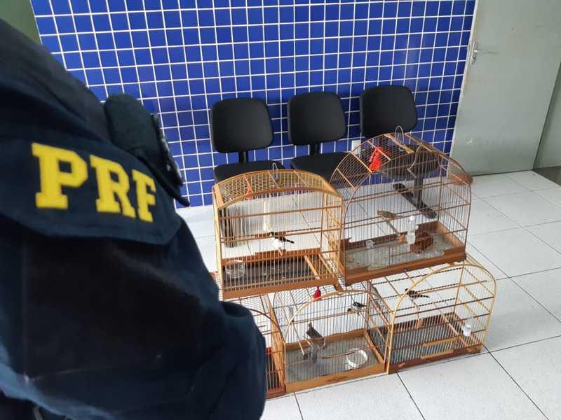 PRF apreende animais silvestres na BR-402 — Foto: Divulgação /PRF-PI