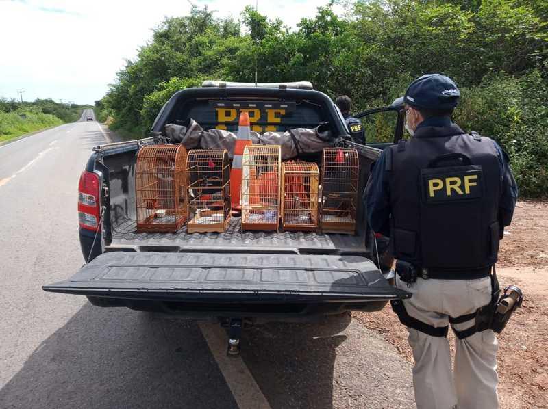 Pássaros foram encontrados em um carro durante uma abordagem policial — Foto: Divulgação /PRF